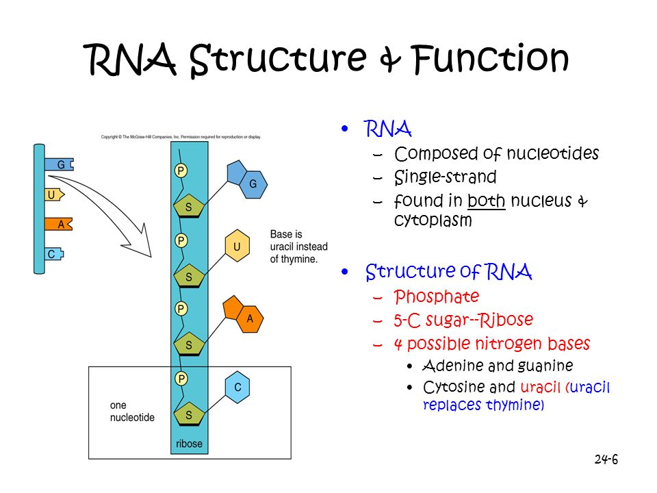 RNA Structure & Function