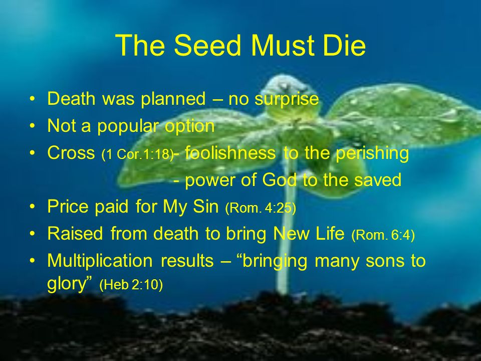The Seed Must Die Death was planned – no surprise Not a popular option