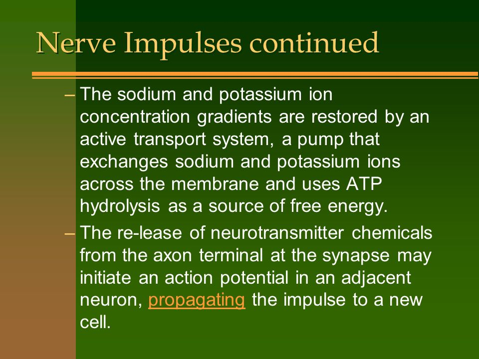 Nerve Impulses continued