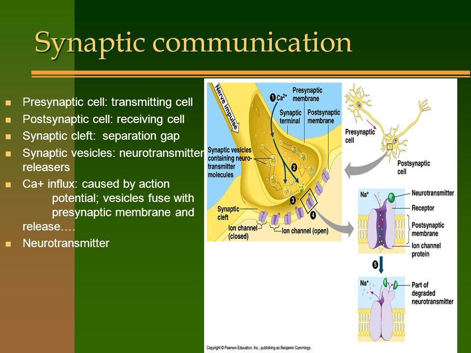 Synaptic communication