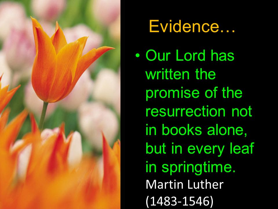Evidence… Our Lord has written the promise of the resurrection not in books alone, but in every leaf in springtime.