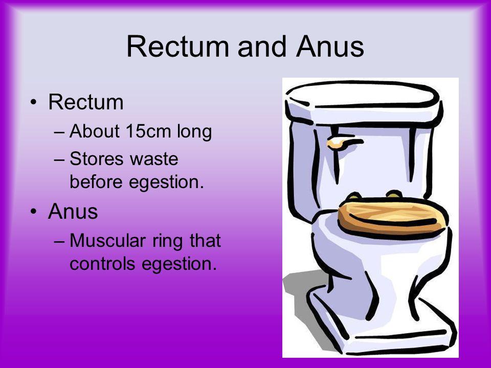 Rectum and Anus Rectum Anus About 15cm long