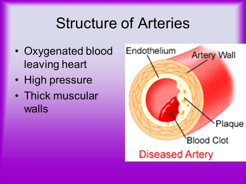 Structure of Arteries Oxygenated blood leaving heart High pressure