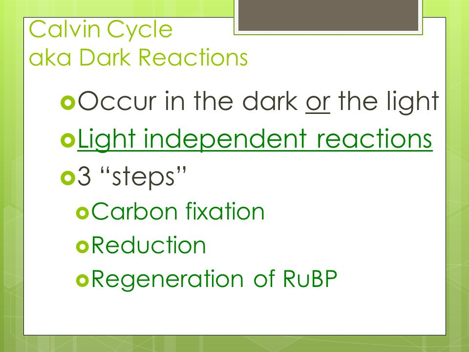 Calvin Cycle aka Dark Reactions