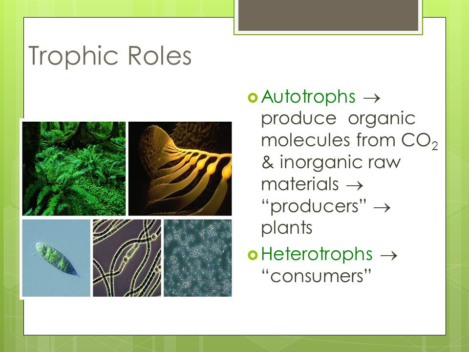 Trophic Roles Autotrophs  produce organic molecules from CO2 & inorganic raw materials  producers  plants.