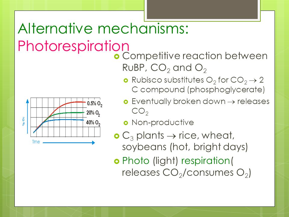 Alternative mechanisms: Photorespiration