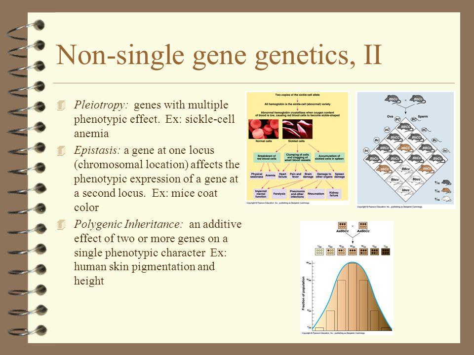 Non-single gene genetics, II