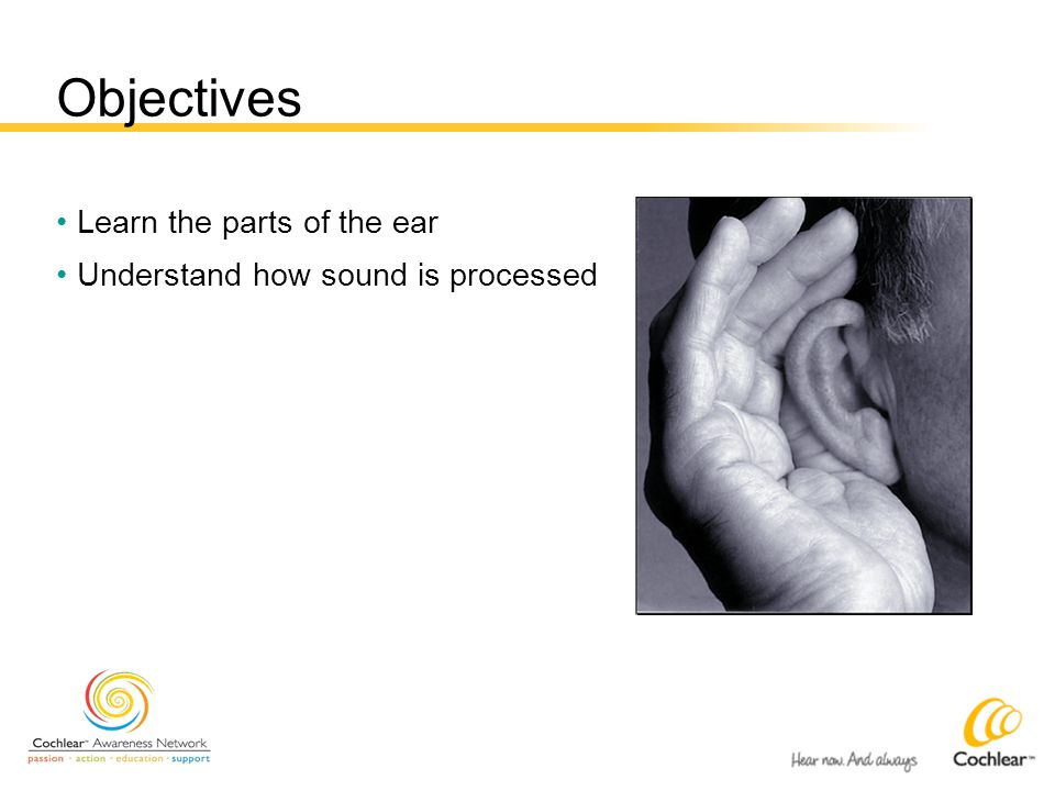 Objectives Learn the parts of the ear