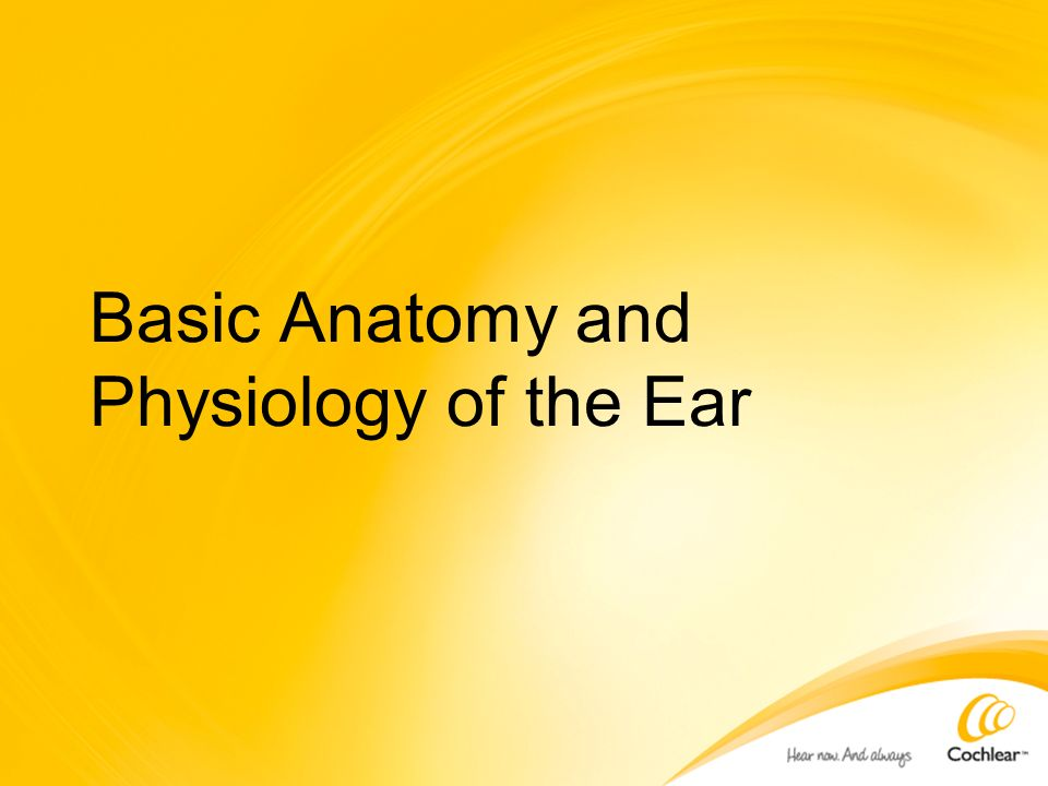 Basic Anatomy and Physiology of the Ear