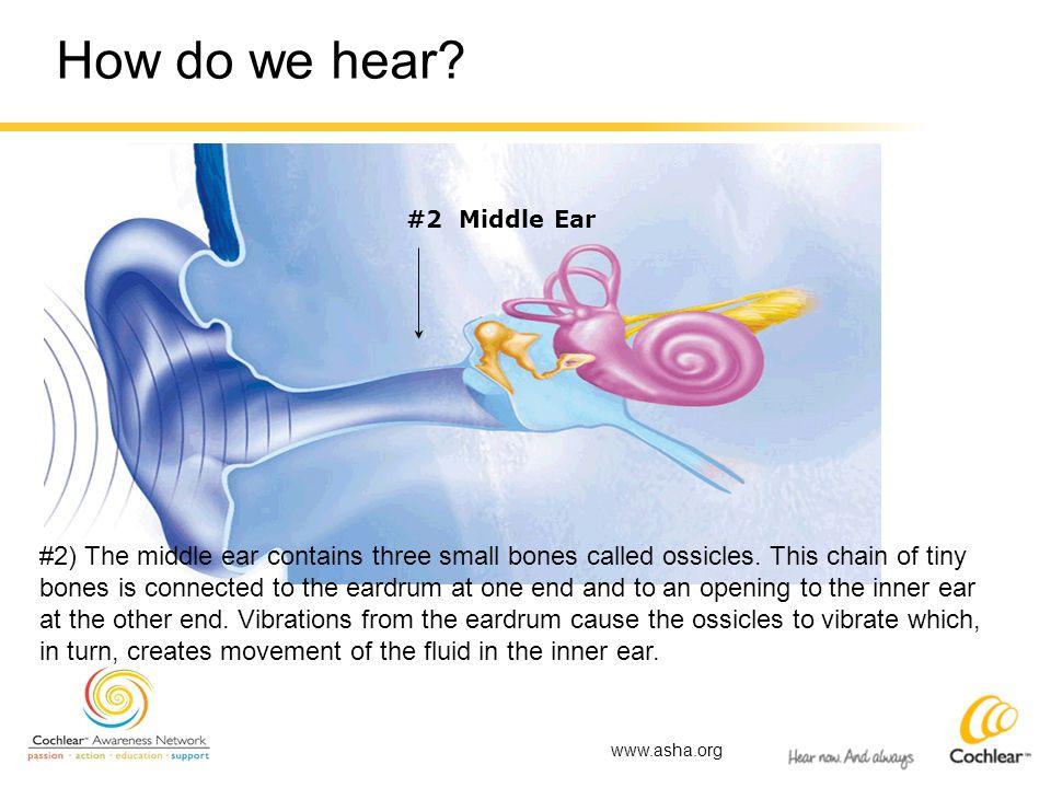 How do we hear #2 Middle Ear.