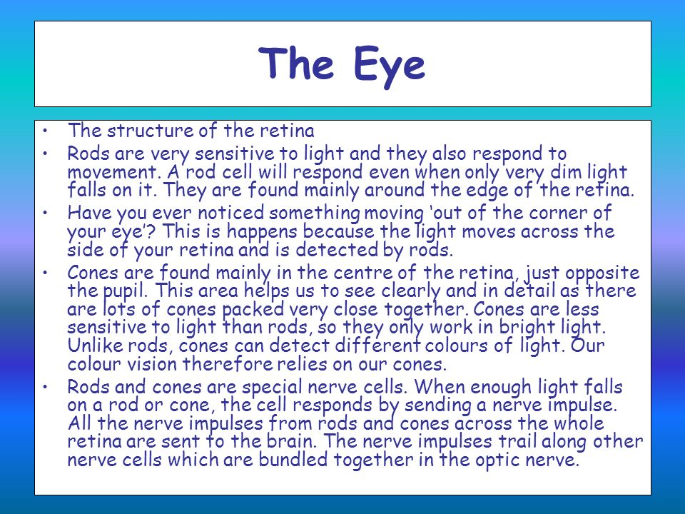 The Eye The structure of the retina