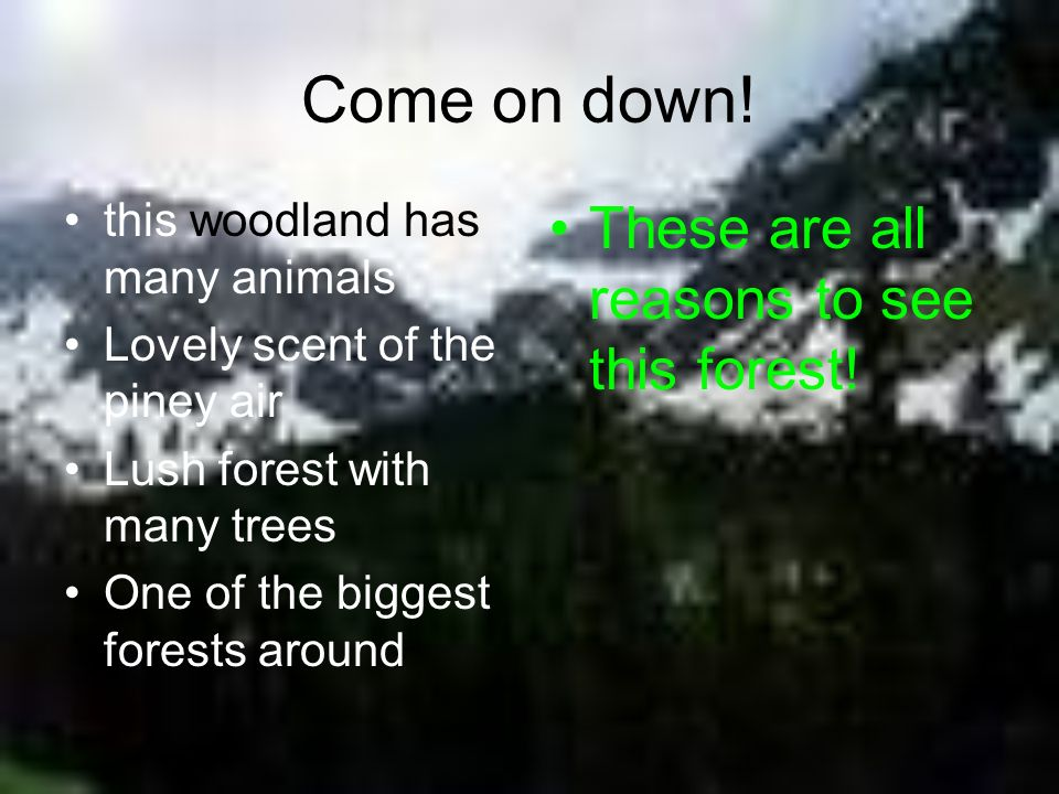 Come on down! These are all reasons to see this forest!