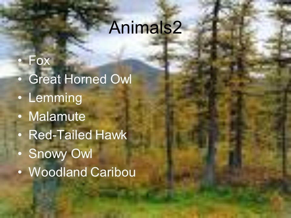 Animals2 Fox Great Horned Owl Lemming Malamute Red-Tailed Hawk