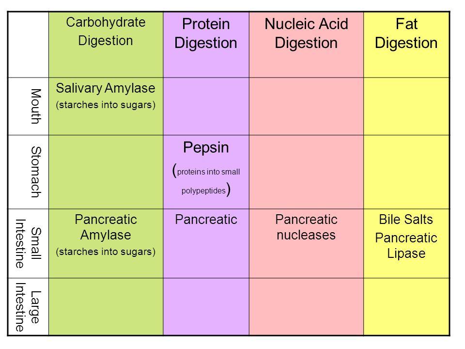 Nucleic Acid Digestion Fat Digestion
