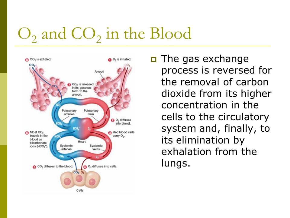 O2 and CO2 in the Blood