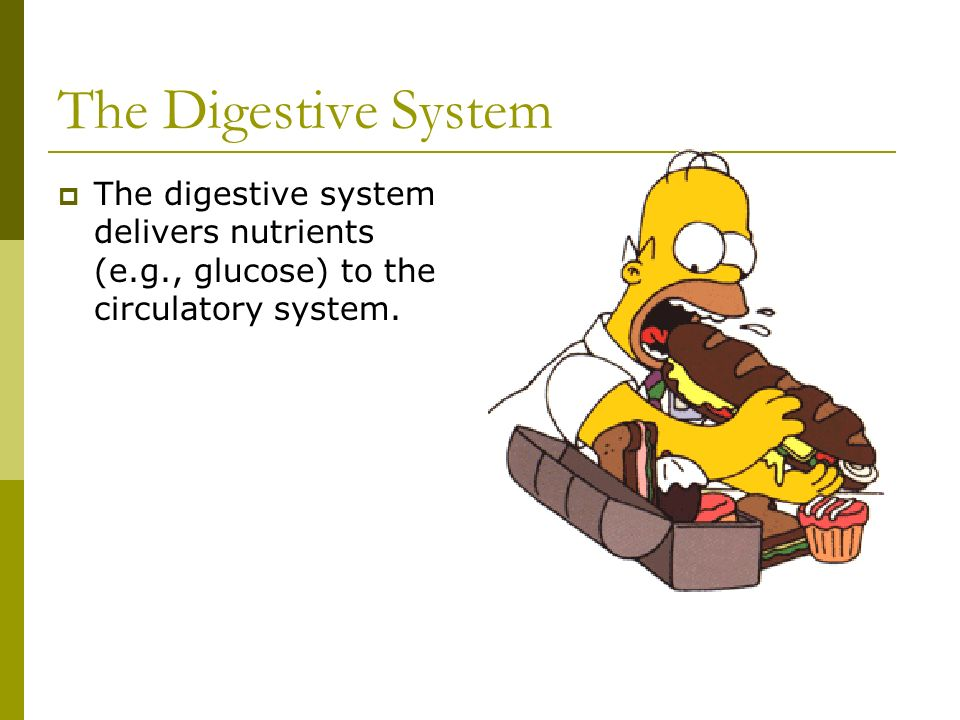 The Digestive System The digestive system delivers nutrients (e.g., glucose) to the circulatory system.
