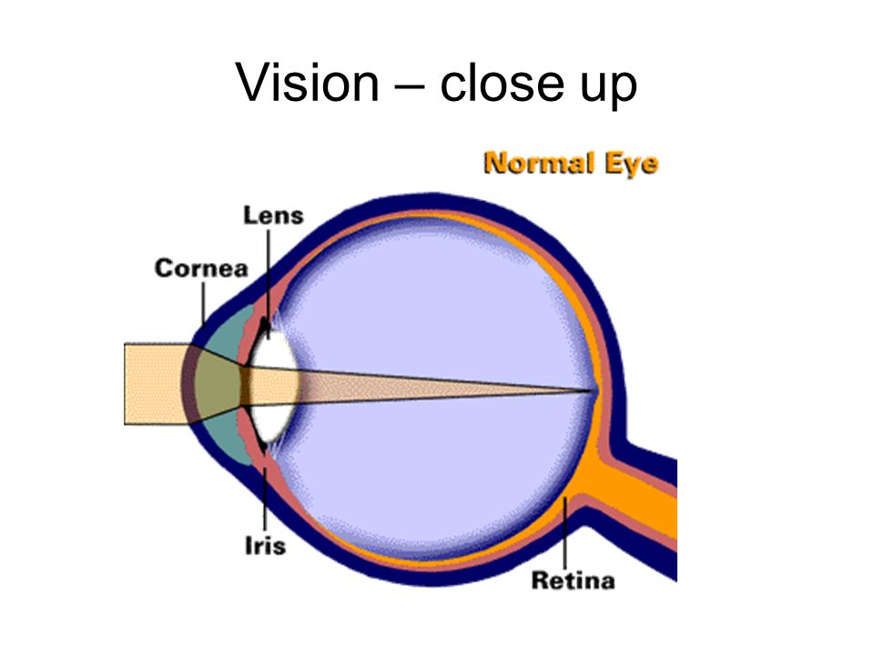 Vision – close up