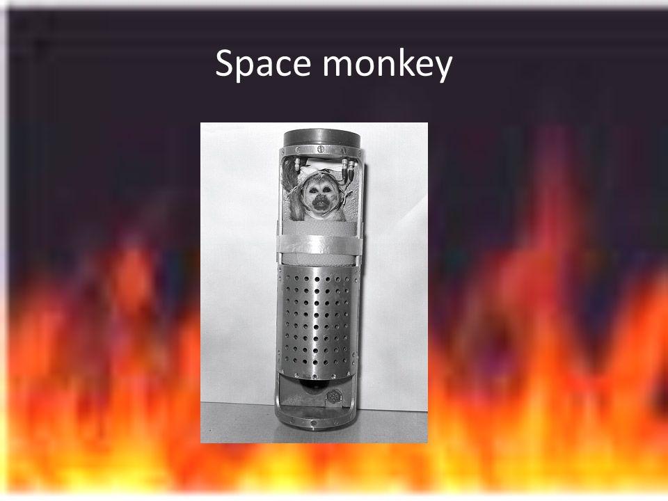 Space monkey