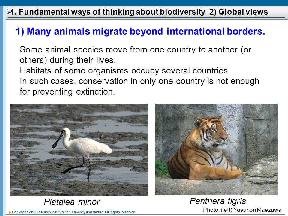 1. Fundamental ways of thinking about biodiversity 2) Global views