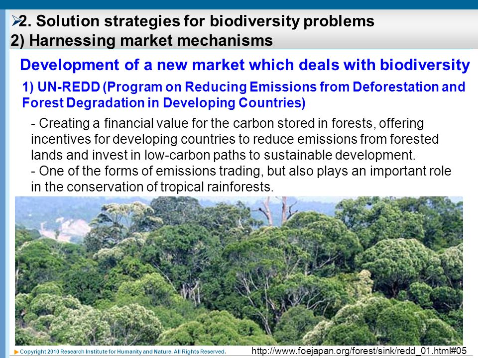 Development of a new market which deals with biodiversity
