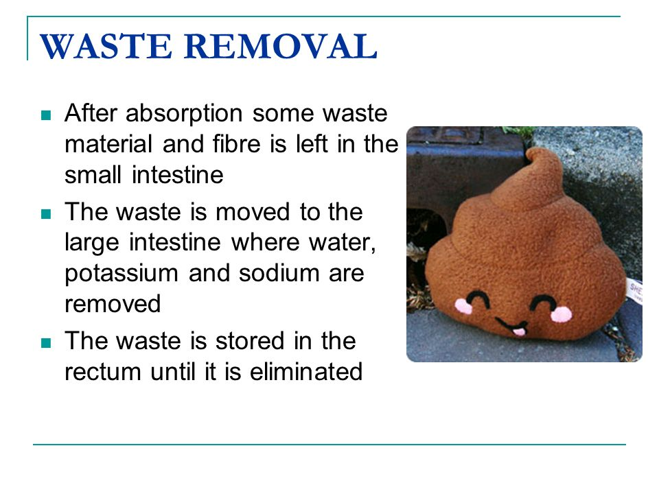 WASTE REMOVALAfter absorption some waste material and fibre is left in the small intestine.