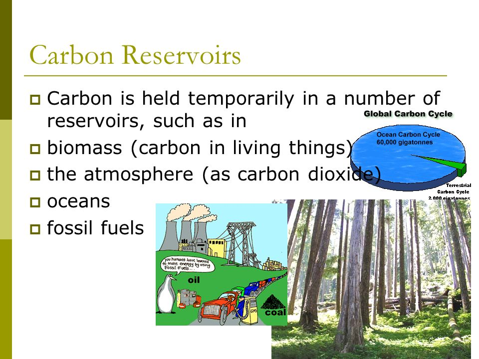 Carbon Reservoirs Carbon is held temporarily in a number of reservoirs, such as in. biomass (carbon in living things)