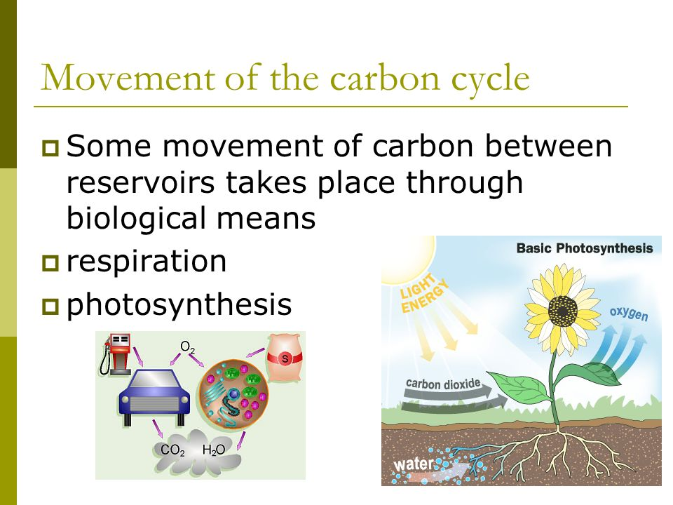Movement of the carbon cycle