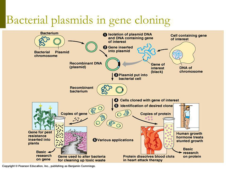 Bacterial plasmids in gene cloning