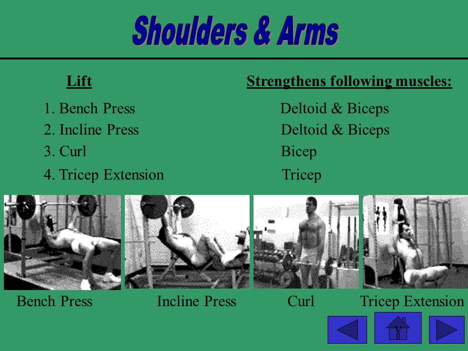 Shoulders & Arms Lift Strengthens following muscles: 1. Bench Press