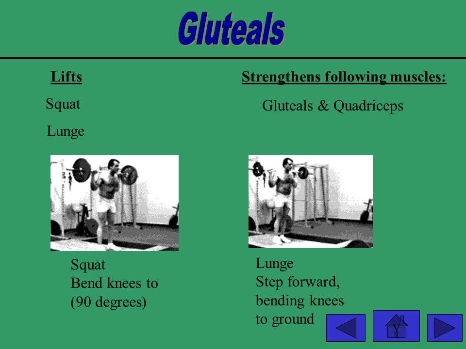 Gluteals Lifts Strengthens following muscles: Squat