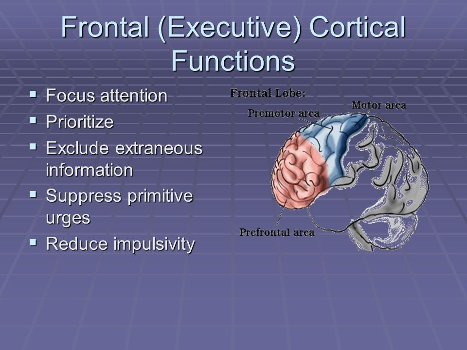 Frontal (Executive) Cortical Functions