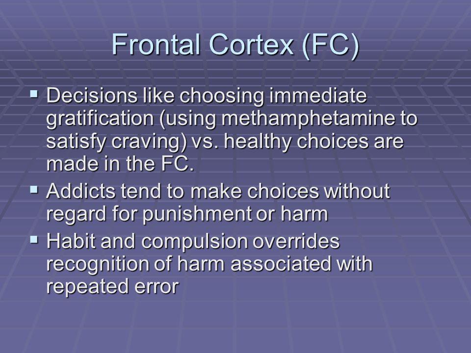 Frontal Cortex (FC)
