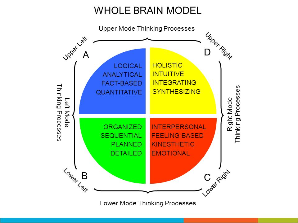 WHOLE BRAIN MODEL D A B C Upper Mode Thinking Processes Upper Right