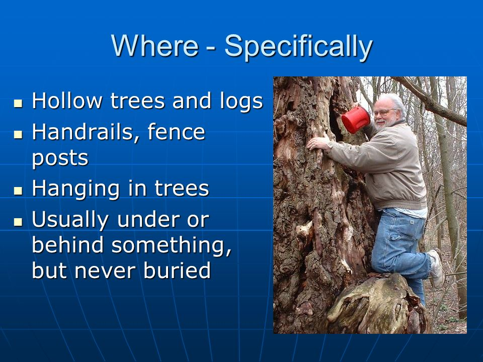 Where - Specifically Hollow trees and logs Handrails, fence posts