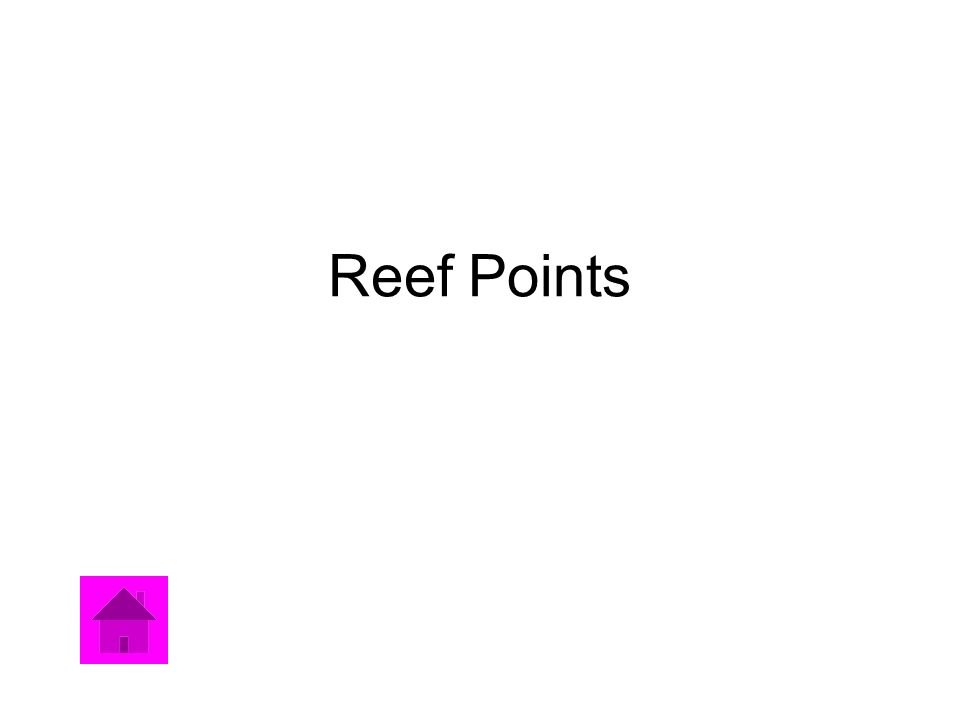 Reef Points