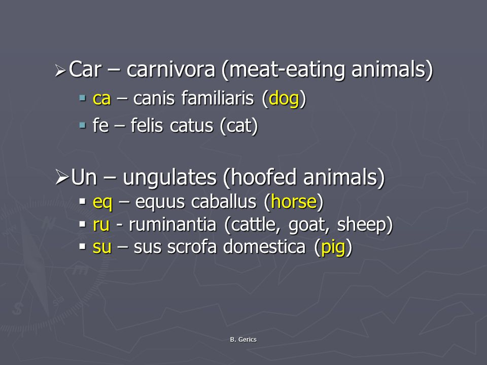 Car – carnivora (meat-eating animals)