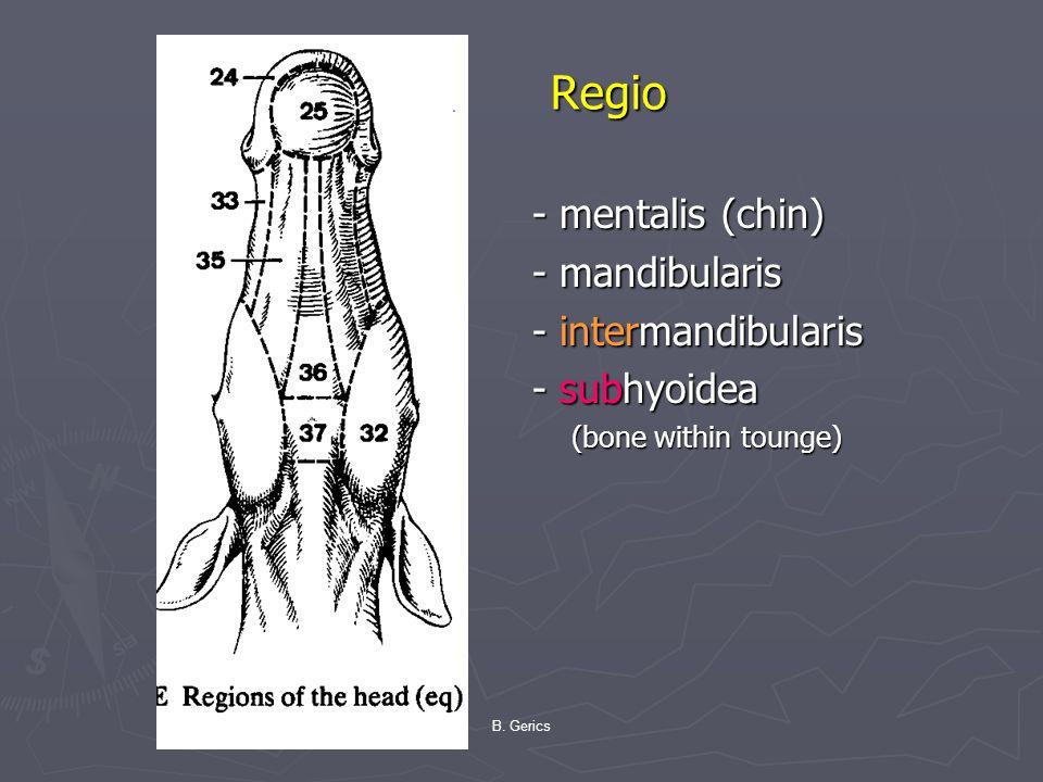 Regio - mentalis (chin) - mandibularis - intermandibularis