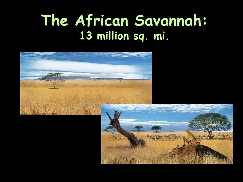 The African Savannah: 13 million sq. mi.