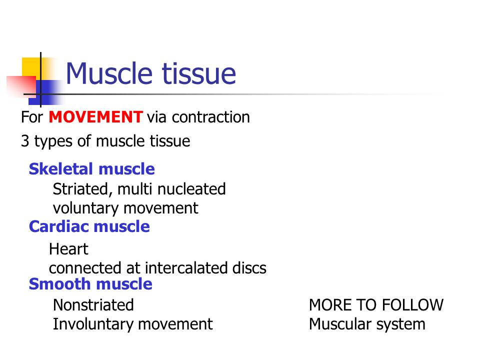 Muscle tissue For MOVEMENT via contraction 3 types of muscle tissue