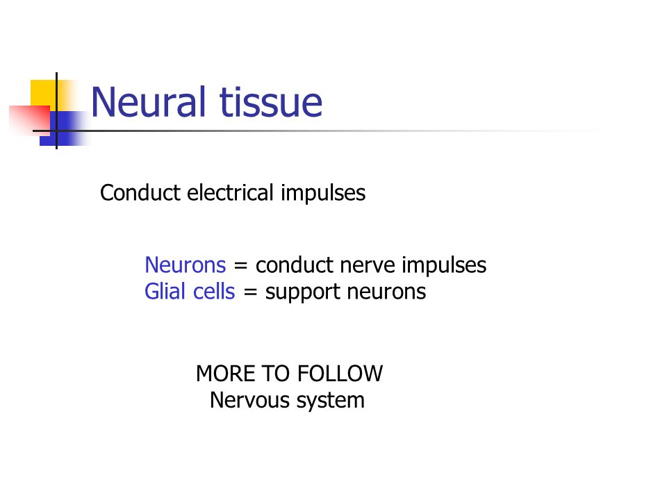 Neural tissue Conduct electrical impulses