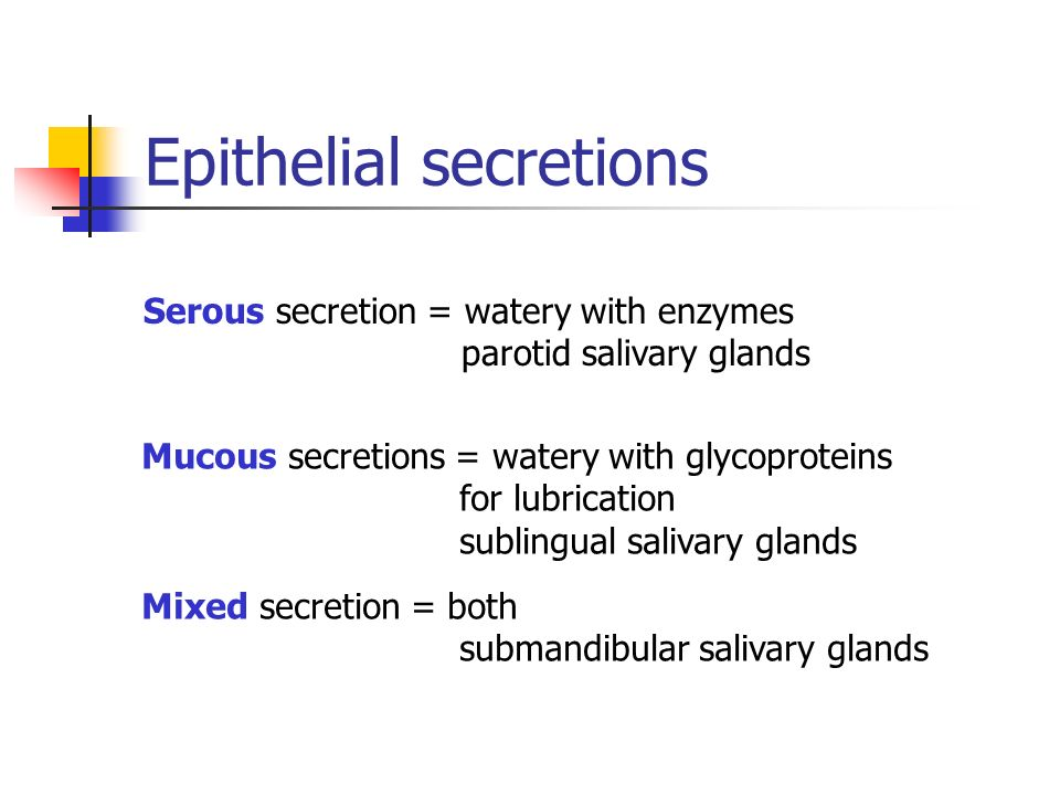 Epithelial secretions