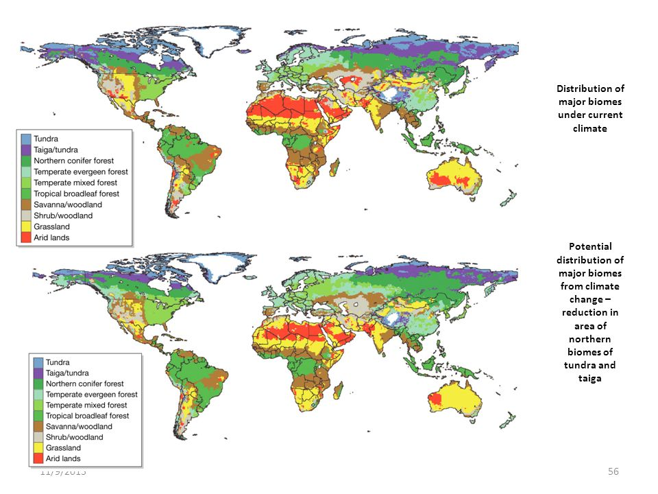 Distribution of major biomes under current climate Potential distribution of major biomes from climate change – reduction in area of northern biomes of tundra and taiga
