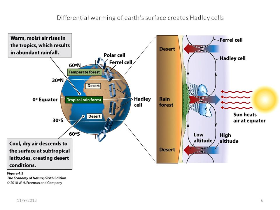 Differential warming of earth's surface creates Hadley cells
