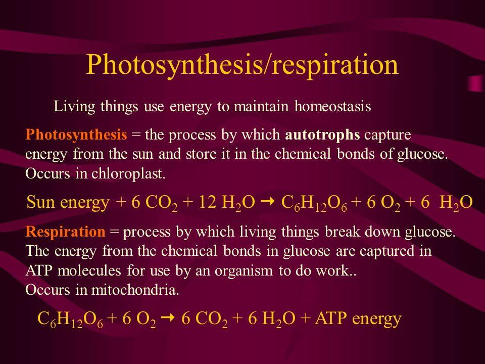 Photosynthesis/respiration