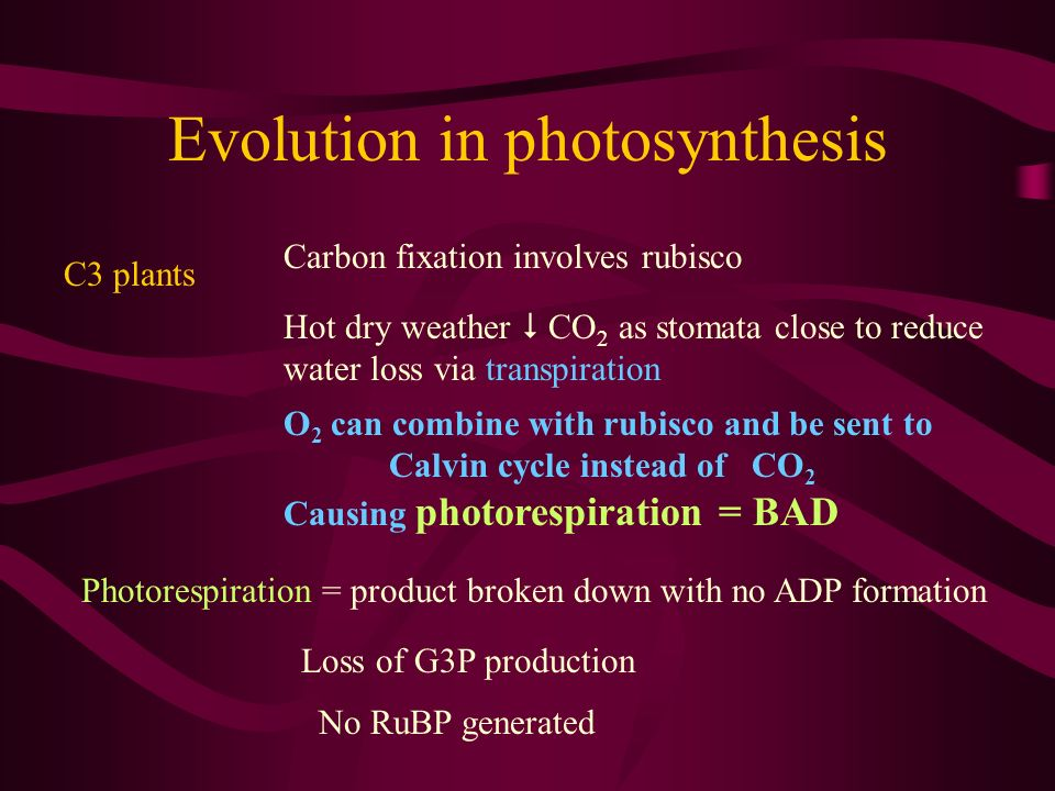 Evolution in photosynthesis