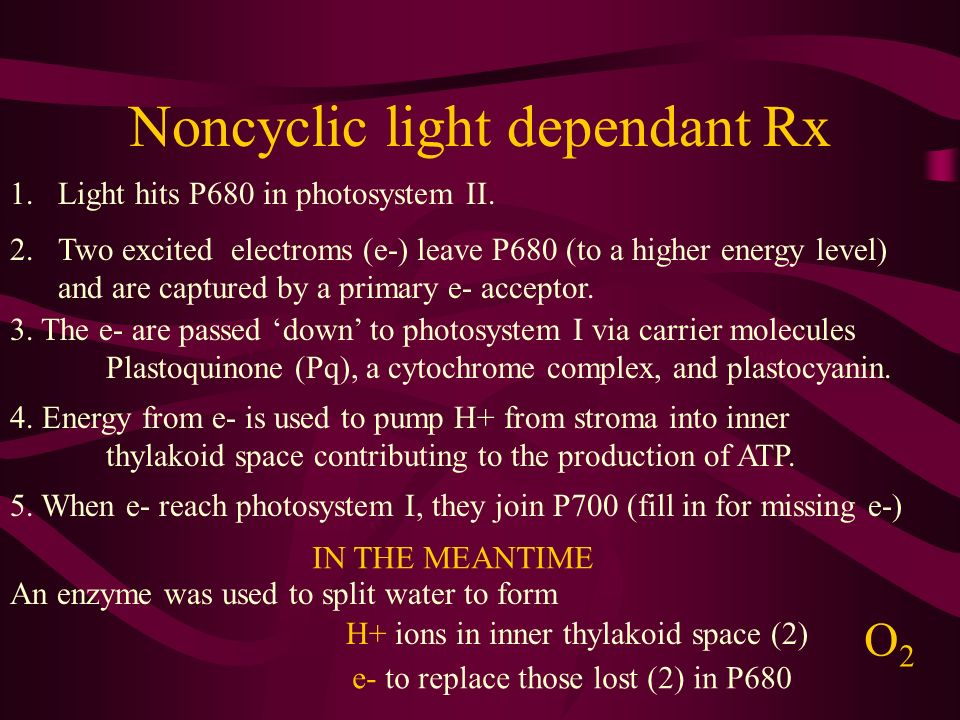 Noncyclic light dependant Rx