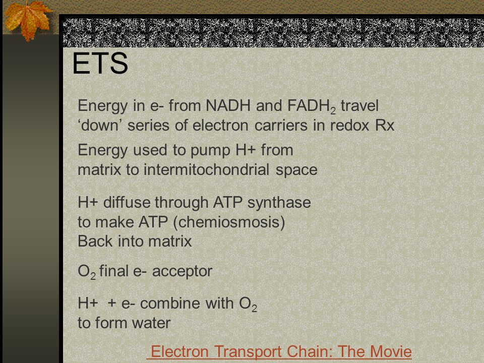 ETS Energy in e- from NADH and FADH2 travel