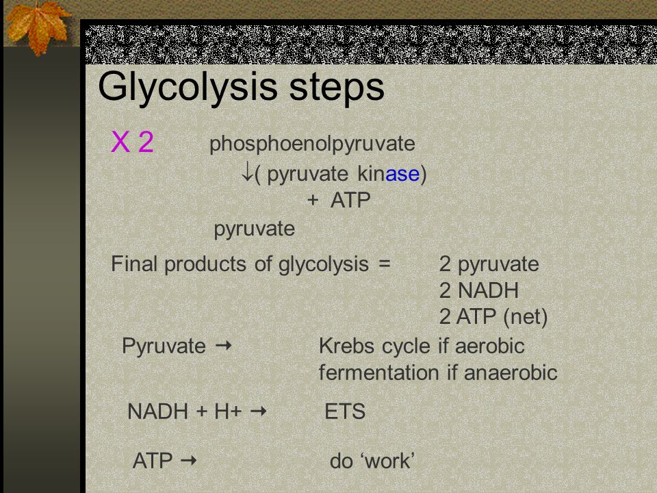 Glycolysis steps X 2 phosphoenolpyruvate ( pyruvate kinase) + ATP