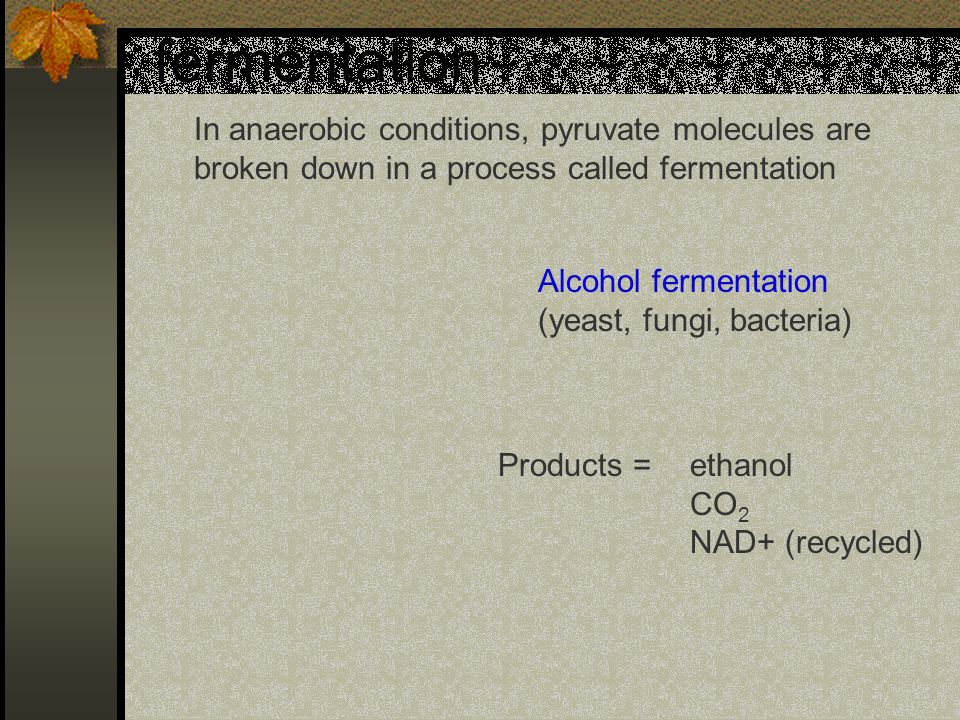 fermentation In anaerobic conditions, pyruvate molecules are