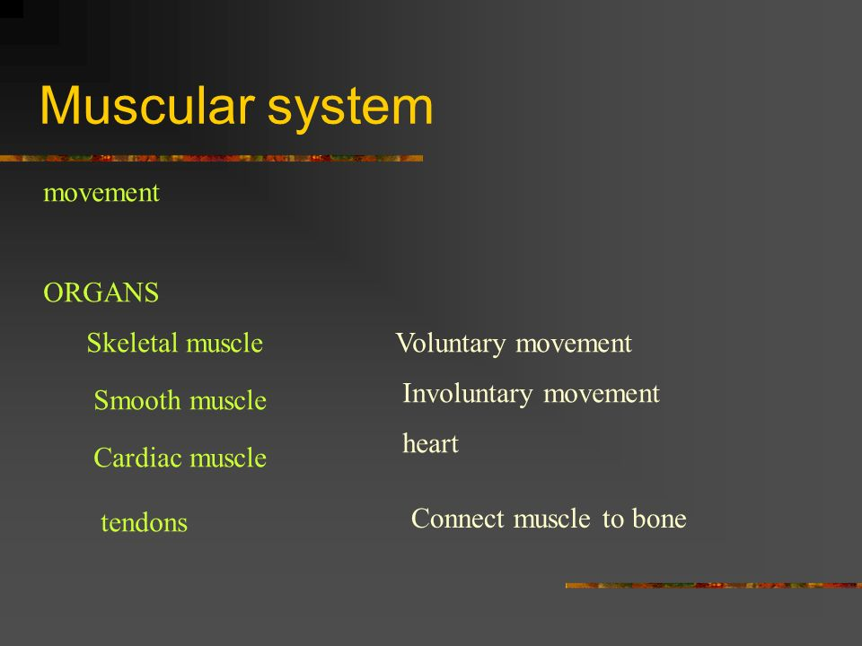 Muscular system movement ORGANS Skeletal muscle Voluntary movement